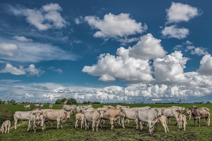 Koeien in het Friese landschap met Leeuwarden op de achtergrond van Harrie Muis