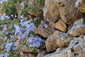 Blue violet van Marcel Hondeveld