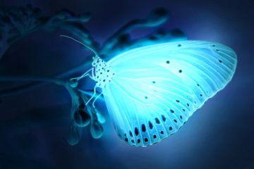 Glühender Schmetterling von Bert Hooijer