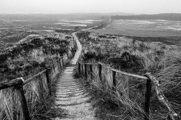 ein Spaziergang durch die Dünen von jeroen akkerman