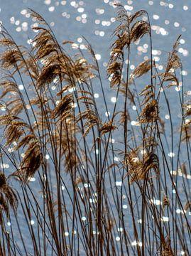 Riet met de zon in het water, Plasmolen van Jeroen Hoogakker