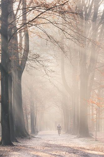 Zonnestralen in mistig Herfst bos