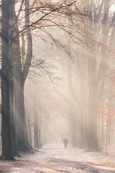 Zonnestralen in mistig Herfst bos van Ingrid Van Damme fotografie