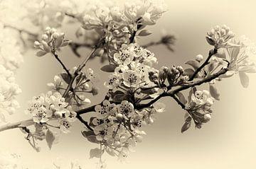 Bloesem in zwart wit von Leo Langen