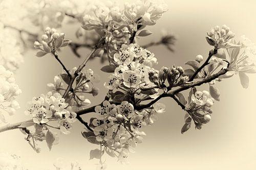 Bloesem in zwart wit van