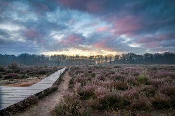 Sonnenaufgang am Vlonderpad im Mastbos von E Blaas
