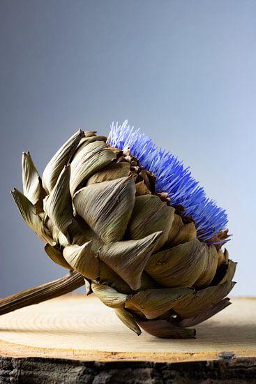 Artisjok in bloei van Clazien Boot