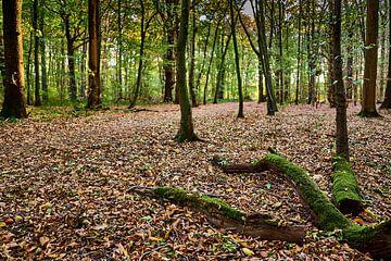 Met mos bedekte omgevallen boomstammen in het bos in de herfstmaanden van 77pixels