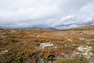 Mossen in Dovrefjell van Barbara Brolsma