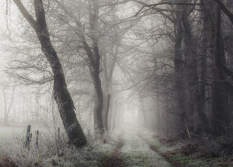 Bevroren mysterieus pad van Peschen Photography