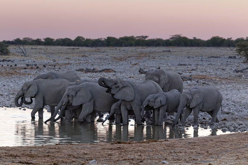 Etosha National Park - Okaukuejo Water Hole van Eddy Kuipers