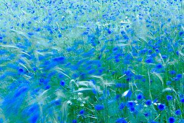 storm over the field von jowan iven