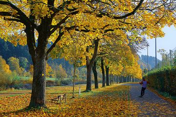 Goldener Herbstmorgen in Freiburg von Patrick Lohmüller