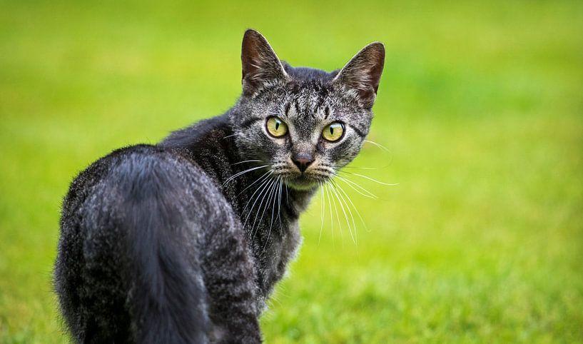 Cat von Paula Darwinkel
