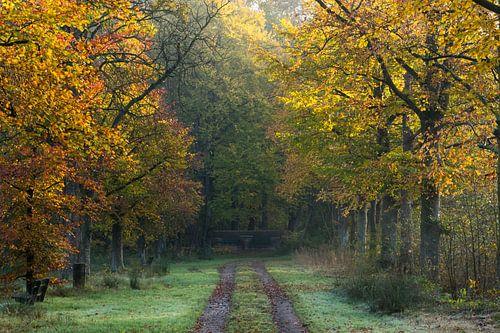 Herfst in het Nietapsterbos bij de Meester Postumabank van Hessel de Jong