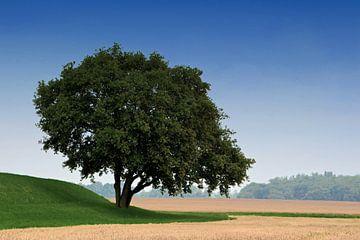 een enkele boom aan de rand van het veld