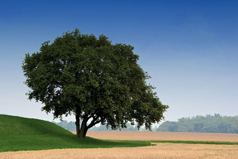 arbre unique au bord du champ sur Heiko Kueverling