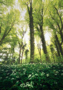 Groen, Groener, Groenest van Joris Pannemans - Loris Photography