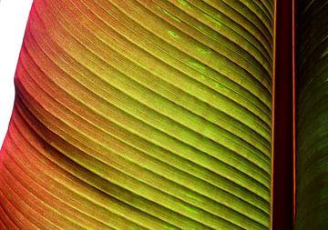 Leaf van Ton van Buuren