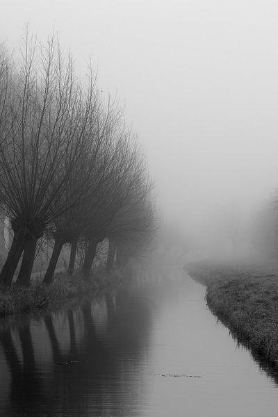 Nebel von sophiimage