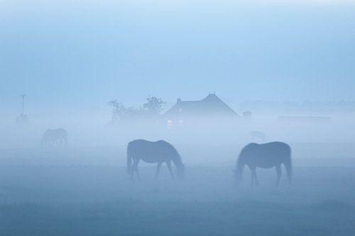 Grazende paarden in de mist bij Dorkwerd