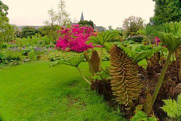 Gunnera in Blüte im Schlossgarten von joyce kool