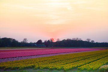 Roze zonsondergang achter de bloembollen velden van Stefanie de Boer