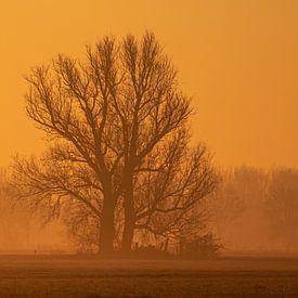 Sonnenaufgang, Niederlande von Nynke Altenburg