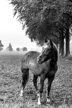 Paard in de wei van Arjan Mak