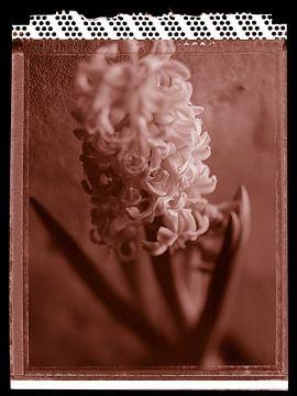 Polaroid Hyacinth sur Karel Ham