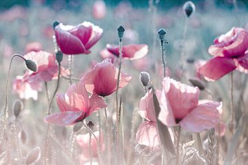 Mohnblumen pastell rose von Julia Delgado