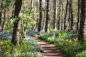 Foto van een pad in het bos met wilde hyacinten aan de zijkant. van Cor Brugman