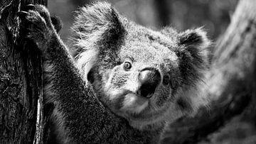 De Australische Koala (Zwart Wit) van Be More Outdoor