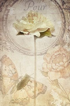 Paeonia van Claudia Moeckel
