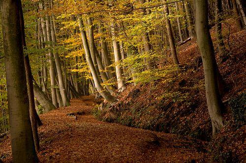 Herfst op de Sint Jansberg van