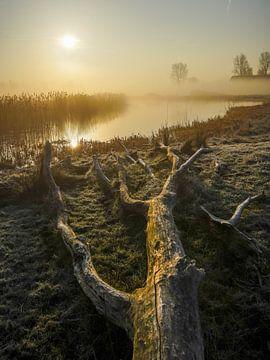Frühlingsfreude am Morgen von Dirk van Egmond