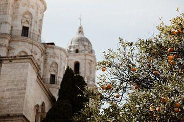 Sinaasappels in Malaga van Isis Sturtewagen