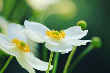 Blumen von Jacqueline Zwakenberg