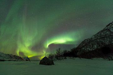 Nordlicht über einer Winterlandschaft auf den Lofoten in Nordnorwegen von Sjoerd van der Wal