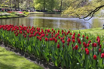 rode tulpen van Annelies Voss