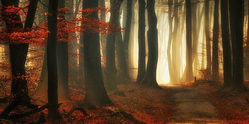 Rode herfst (landscape) van Rigo Meens