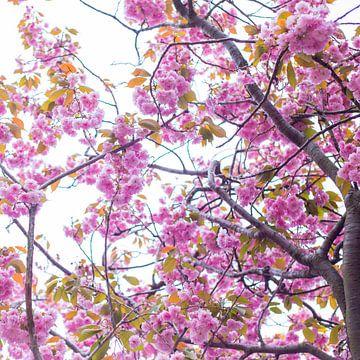 Bloesem in roze 4 von Wen van  Gampelaere