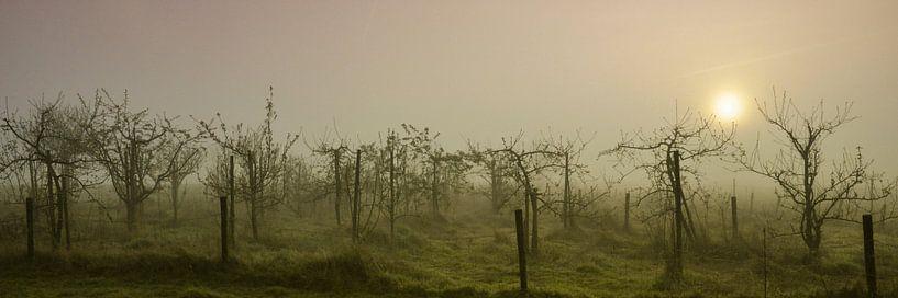 Boomgaard in de mist van Anja Jooren