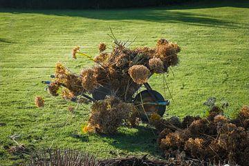 Stilleven met hortensia in de herfst in de tuin
