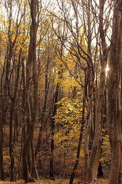 Gouden bladeren sur Assia Hiemstra