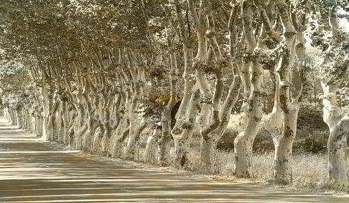 1965 Dancing plane trees - Remix