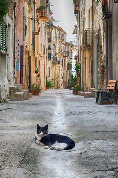 Chat garde la rue sur