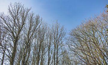 Winterse Bomen met Lentelucht van Steven Otter