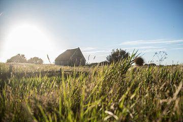 Schapenboet Texel von Jitske Cuperus-Walstra