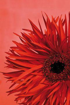 Foto van een rode bloem. van Therese Brals